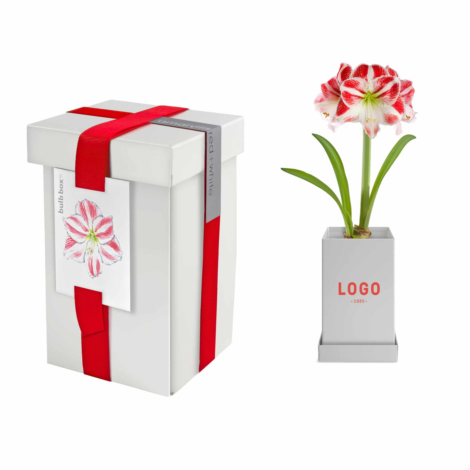 130248 bulb box one color imprint